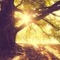 Złota jesień drzewo o poranku - plakat wymiar do wyboru: 120x90 cm