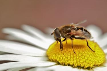 Fototapeta owad 412