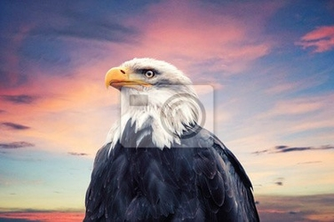 Obraz bald eagle
