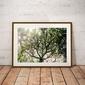 Foggy tree - plakat premium wymiar do wyboru: 60x40 cm
