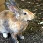 Fototapeta królik siedzący obok budynku fp 2554
