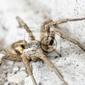 Fototapeta bliska pająk