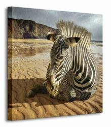 Zebra na plaży - Obraz na płótnie
