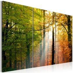 Obraz - spokojny jesienny las