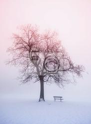 Obraz zimowe drzewa w mgły o wschodzie słońca
