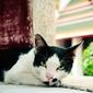 Fototapeta kot leżący przy oknie fp 2515