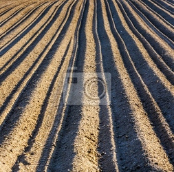 Fototapeta tło z zaoranym polu