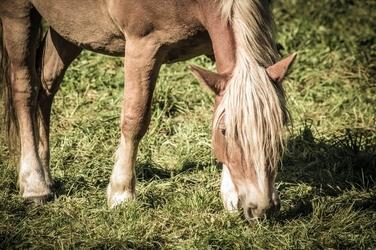 Fototapeta koń na łące fp 2746