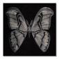 Moth - obraz na płótnie