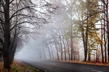 Fototapeta drzewa 4393