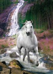Biały koń wodospad - plakat