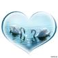 Obraz na płótnie canvas piękna para łabędzi w kształcie serca