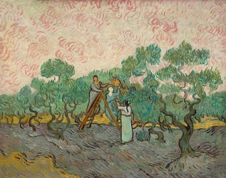 Women picking olives, vincent van gogh - plakat wymiar do wyboru: 42x29,7 cm