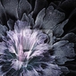 Obraz niebieski futurystyczny kwiat