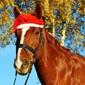 Fototapeta koń w czapce mikołaja fp 2858