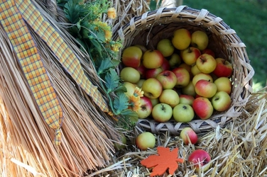 Fototapeta jabłka wypadające z kosza fp 844