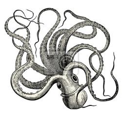 Naklejka pieuvre octopus vulgaris