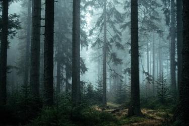 Obraz tajemniczy las okryty mgłą fp 1409 p