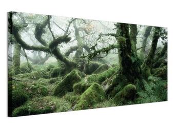 Wistmans wood, dartmoor - obraz na płótnie