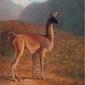 lama -  jacques-laurent agasse ; obraz - reprodukcja