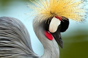 Fototapeta na ścianę kolorowy ptak fp 2540