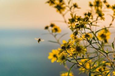Fototapeta na ścianę żółte kwitnące kwiaty fp 3483