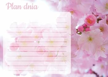 Plan dnia tablica suchościeralna kwiat wiśni 359