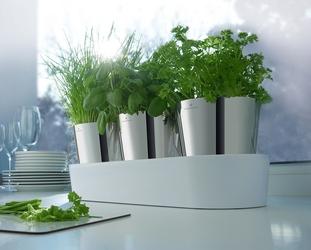 Doniczki na zioła w podstawce gourmet wmf 0641306040