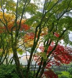 Japoński ogród 159 fototapeta