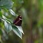 Fototapeta na ścianę motyl na gałeźi fp 2521