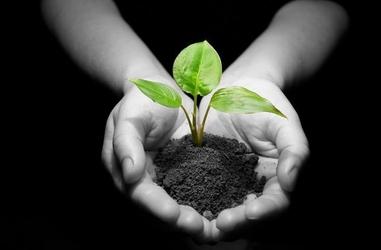 Roślina w dłoniach - fototapeta