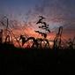 Fototapeta na ścianę zacienione rośliny w tle zachodzącego słońca fp 5206