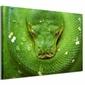 Kuranda Koala Gardens Snake - obraz na płótnie