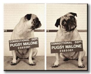 Pugsy malone - obraz na płótnie