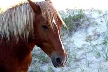 Fototapeta koń 1646