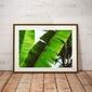 Leaf - plakat premium wymiar do wyboru: 40x30 cm