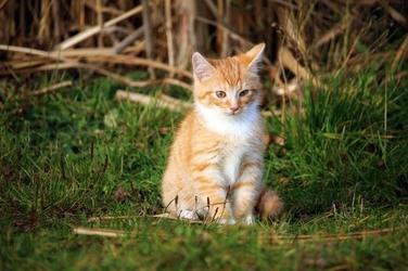 Fototapeta kot siedzący w trawie fp 2809