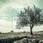 Fototapeta drzewo vintage style