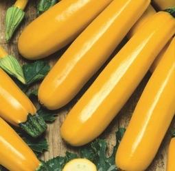 Cukinia soleil – żółta – kiepenkerl