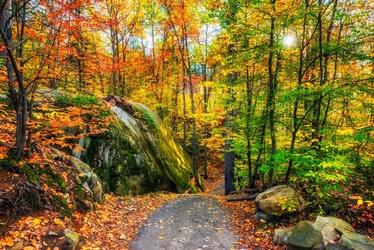 Fototapeta leśna droga 775a