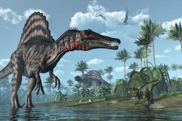 Fototapeta dinozaur 1182