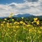 Łąka u podnóża pirenejów - plakat premium wymiar do wyboru: 50x40 cm