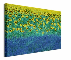 Pole Słonecznikowe - obraz na płótnie