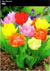 Tulipany pełne – mix – 15 szt.