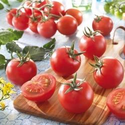 Pomidor aranca f1 – koktajlowy – kiepenkerl