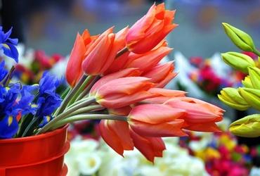 Fototapeta sobotni targ kwiatów fp 819