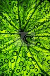 Naklejka owoce cytrusowe zamknąć z pęcherzyków