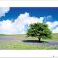 Tree - plakat premium