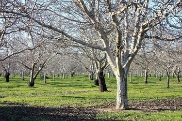 Fototapeta na ścianę drzewa bez liści fp 1805
