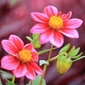 Fototapeta kwiaty 181